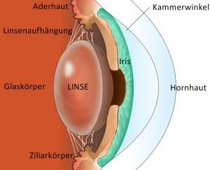 Aufbau Auge - Chiemsee Augen Tagesklinik